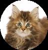 mangimi per animali gatto Molino Peirone Boves