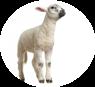 mangimi per animali ovini Molino Peirone Boves