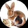 mangimi per animali roditori Molino Peirone Boves