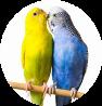mangimi per animali uccellini-ornitologia Molino Peirone Boves